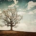 """Imagekind"" by BrandyFord"
