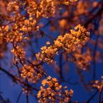 """Evening Blossoms 676"" by John-foster"