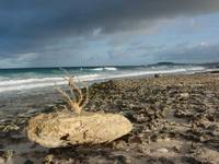 Rocky shore with branch