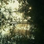 """""""Bibbulmun Track"""" by KidH"""