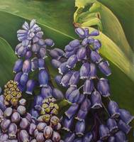 New York City Muscari