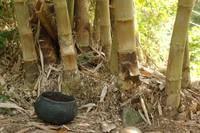 Cooking Pot and Bamboo