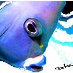 """blue fish"" by ArtbySachse"