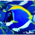"""blue school of fish"" by ArtbySachse"