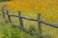 Wildflower Fence