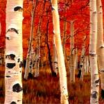 """birch trees"" by ArtbySachse"