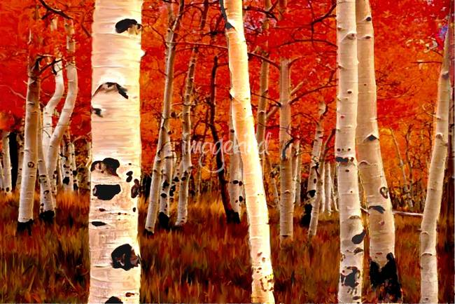 Stunning Quot Birch Trees Quot Artwork For Sale On Fine Art Prints