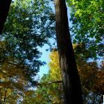 """""""Tree Panoramic"""" by dgaedeke"""