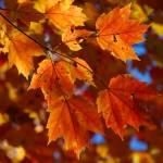 """""""Fall Leaves"""" by dgaedeke"""