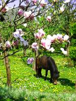 Horse eating grass in floral garden