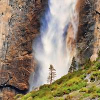 Yosemite Falls and Tree
