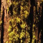 """""""Sunlit Moss"""" by BrendanArthurRing"""