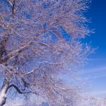 """Frosted Branches and Blue Sky"" by johnmclaird"