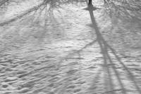 shadows across snow
