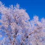 """""""Frosted Tree Tops"""" by johnmclaird"""