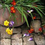 """""""Pot of Freesias"""" by Kirby"""
