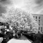 """A Tree Grows In Harlem"" by abecrod"