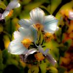 """""""Flower"""" by dave_finlayson"""