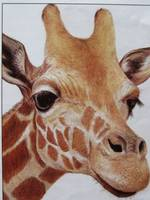 Giraff coloured pencil bub