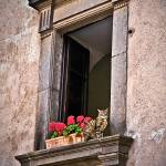 """Cat in Window, Orvieto, Italy - Tans and Red"" by mjphoto-graphics"