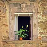 """Flowers in Window, Orvieto,Italy, shades of yellow"" by mjphoto-graphics"