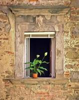 Flowers in Window, Orvieto,Italy, shades of yellow