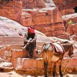 """Portrait of Man with Donkey.. Petra,Jordan"" by mjphoto-graphics"