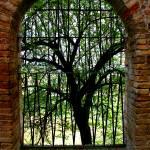 """Italy Tree"" by amandavlastas"