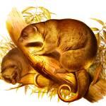 """short tailed cuscus"" by markkumurto"