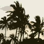 """Single layer Palm trees2_edited-1"" by kitowen"