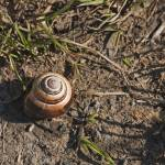 """Snail Shell"" by AvalonLight"