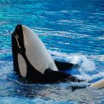 """Shamu"" by WeiZhang"