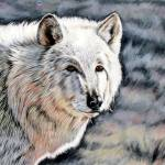 """Arctic Wolf"" by davelarson"
