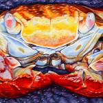 """Sally Lightfoot Crab"" by davelarson"