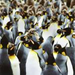 """Penguin Power"" by stevebulford"