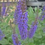 """""""Purple Flower"""" by Cayce_Dagenhart"""