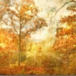 """""""Novembre"""" by CherFerroggiaro"""
