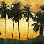 """Palm Trees at Sunset"" by talgreen"