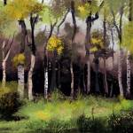 """Birch forrest"" by Medhi"