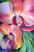 Tropical_Orchid
