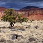 """""""Desert Tree"""" by dkocherhans"""