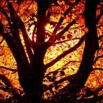"""""""FireTree"""" by pixelholic"""