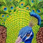 """""""Peacock Attitude"""" by davelarson"""
