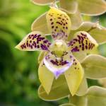 """Orchids of Finca Dracula"" by JohnGSchellinger"
