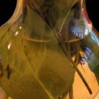 Apres-Fleurs by Patricia Schnepf