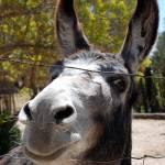 """burro 2"" by wmhwilson"