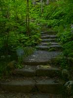 Stone Stair in Green