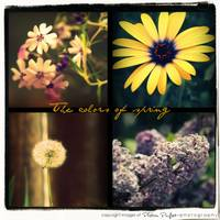 Spring flowers collage picnik