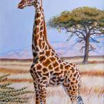 """Giraffe in Tall Grass"" by davelarson"