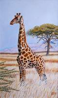 Giraffe in Tall Grass